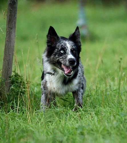 Dog_445